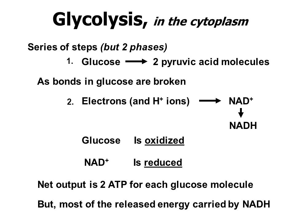 Glycolysis, in the cytoplasm