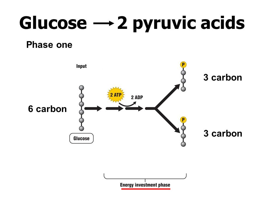 Glucose 2 pyruvic acids Phase one 3 carbon 6 carbon 3 carbon
