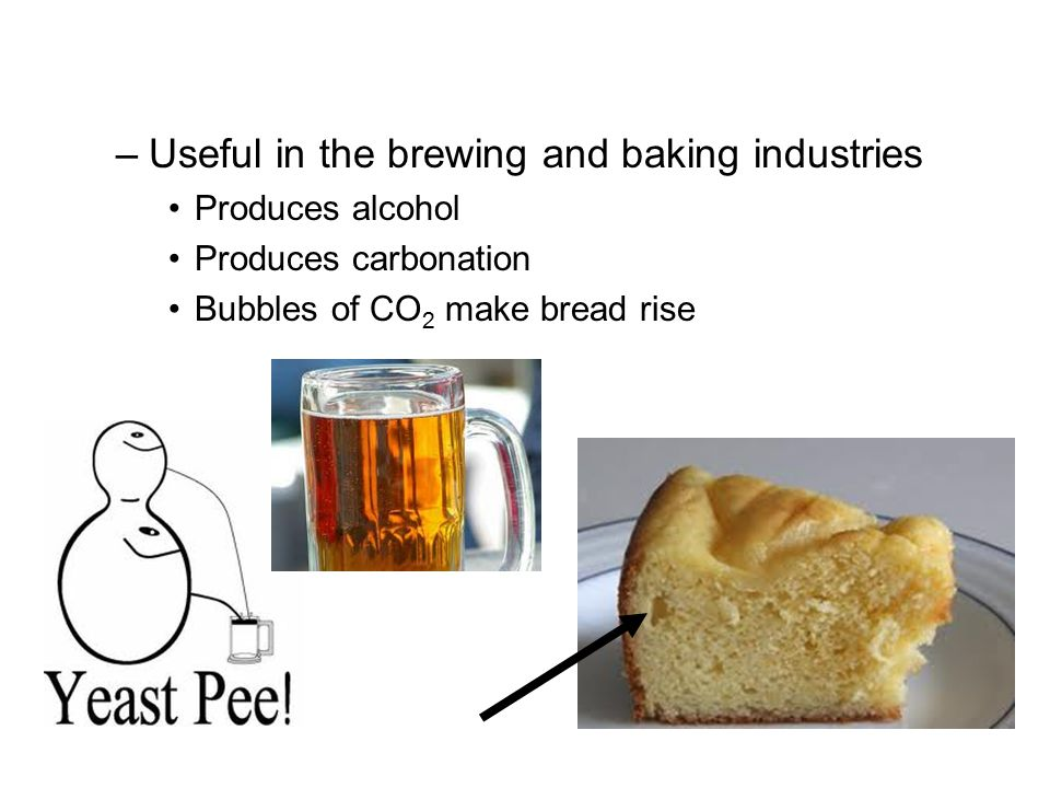 Useful in the brewing and baking industries