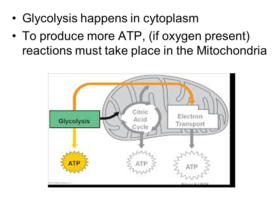 Glycolysis happens in cytoplasm