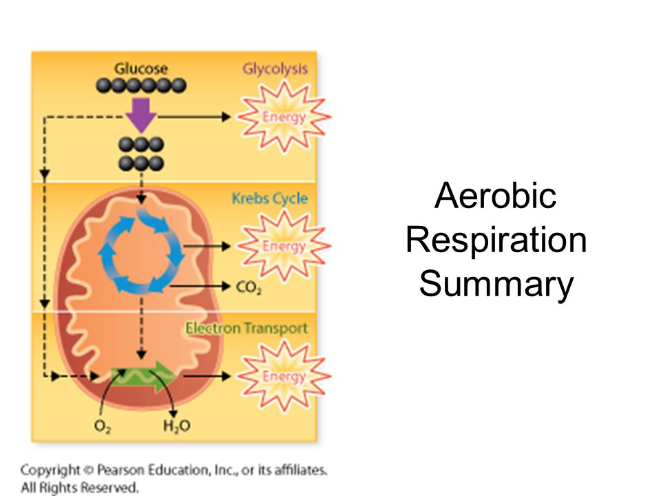 Aerobic Respiration Summary