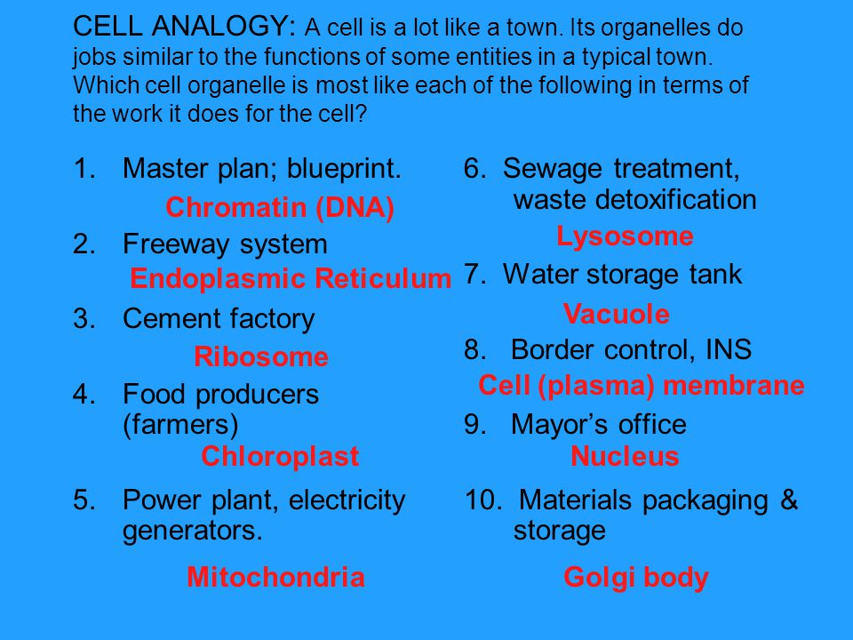 CELL ANALOGY: A cell is a lot like a town