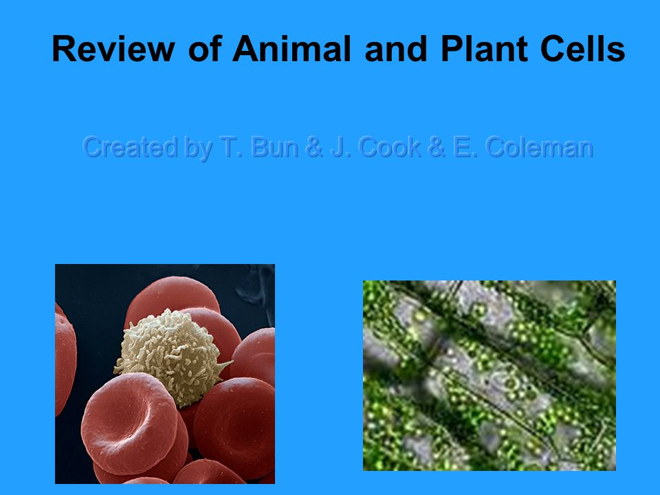 Review of Animal and Plant Cells