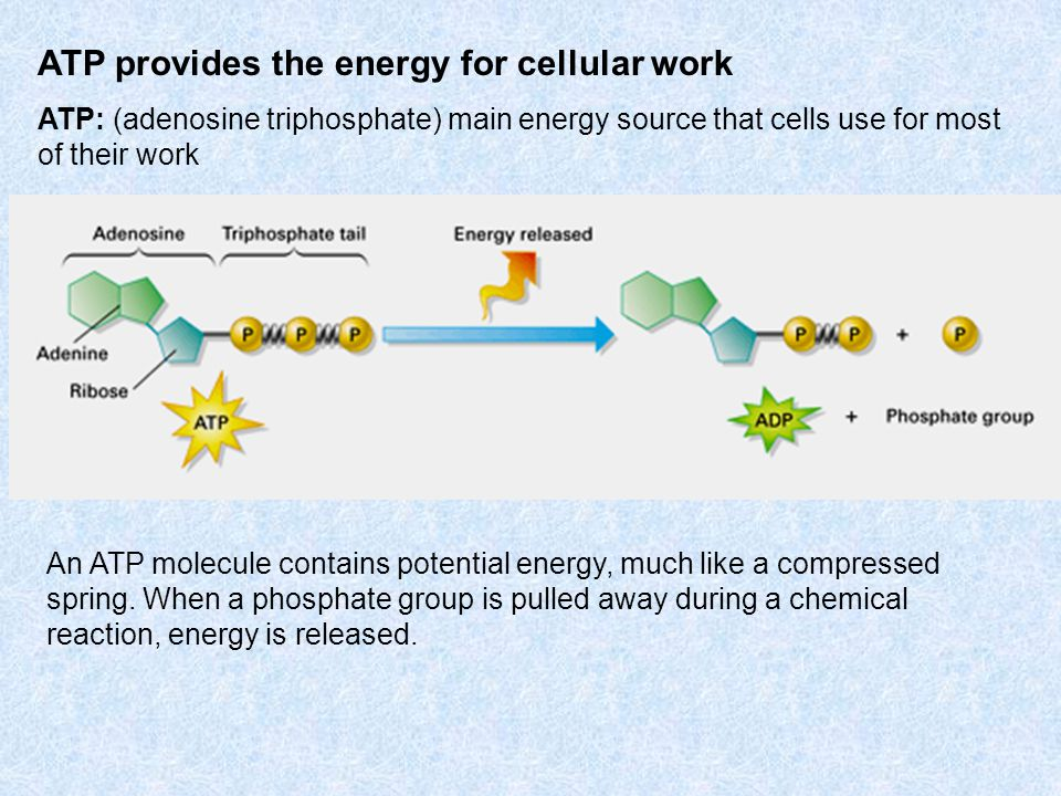 ATP provides the energy for cellular work