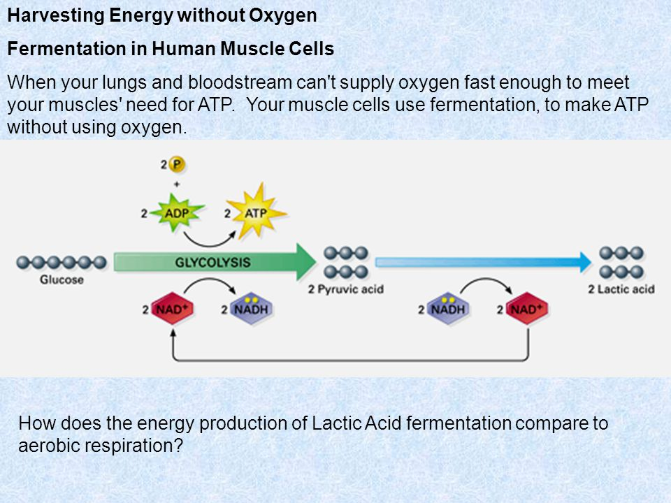 Harvesting Energy without Oxygen