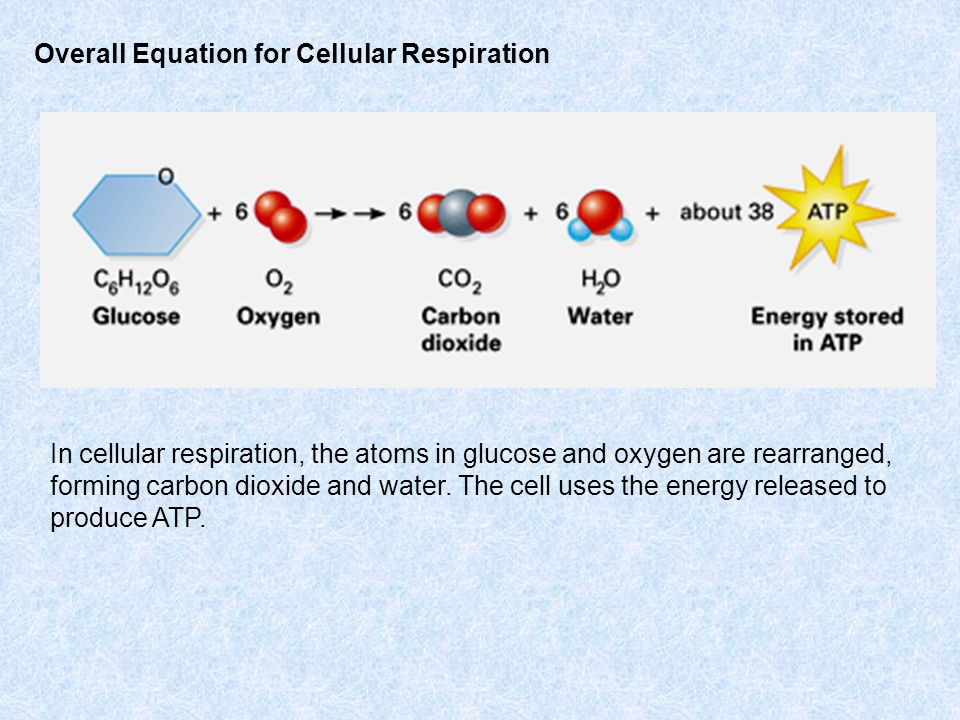 Overall Equation for Cellular Respiration