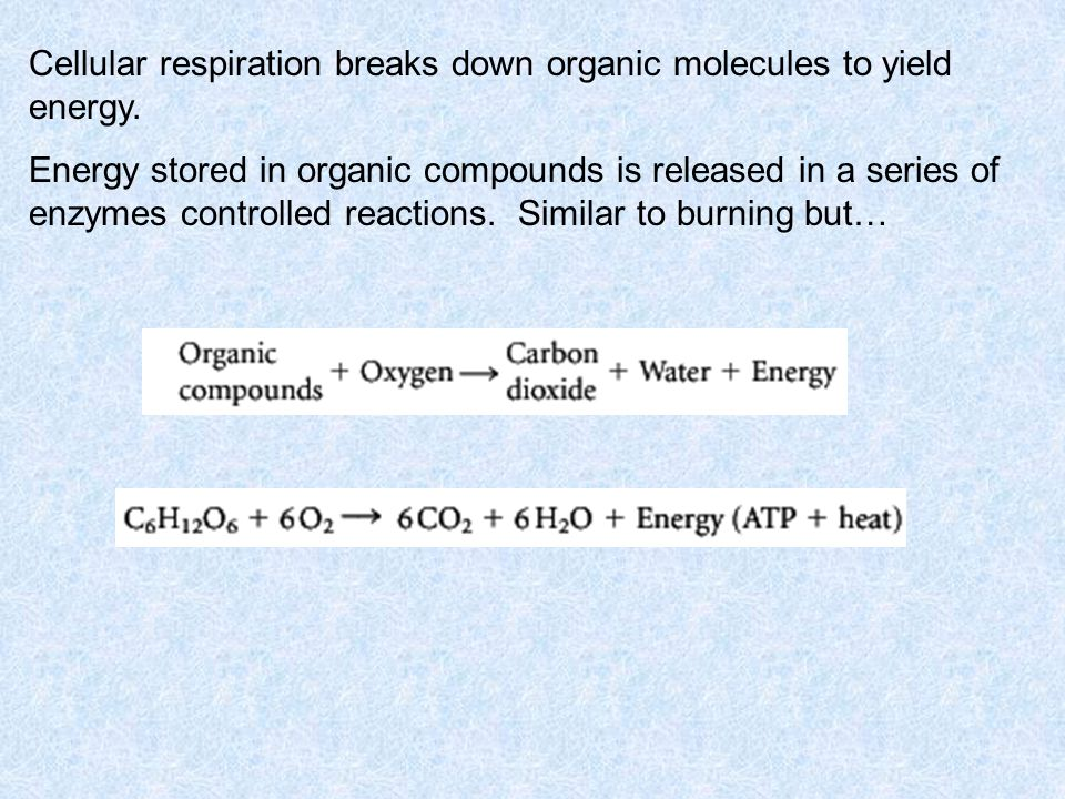 Cellular respiration breaks down organic molecules to yield energy.