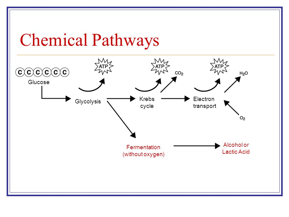 glycolysis and fermentation relationship quotes