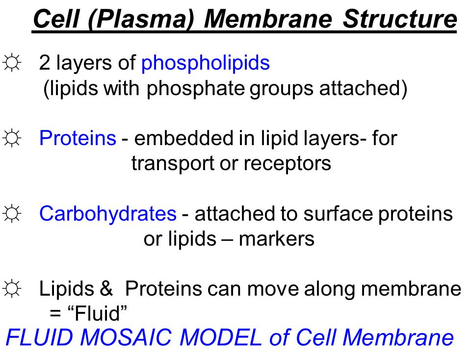 Cell (Plasma) Membrane Structure