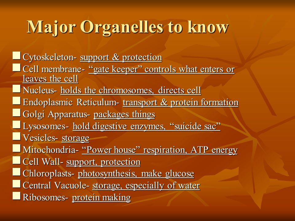 Major Organelles to know