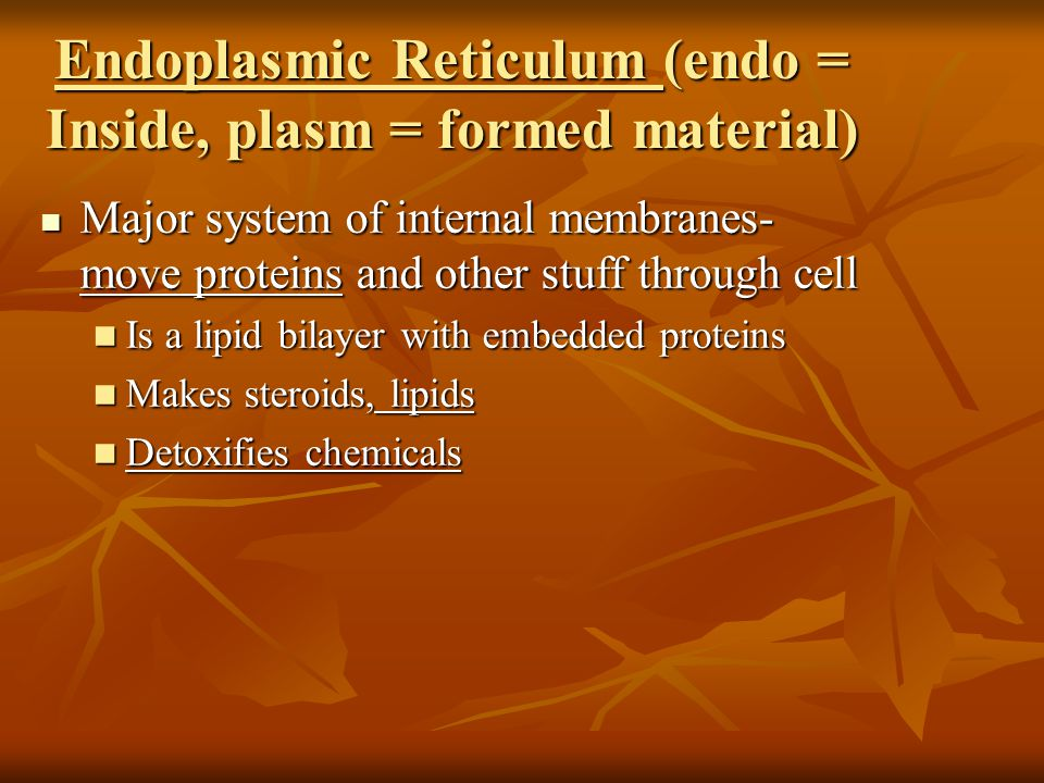 Endoplasmic Reticulum (endo = Inside, plasm = formed material)