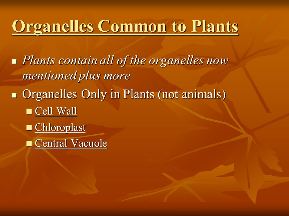 Organelles Common to Plants