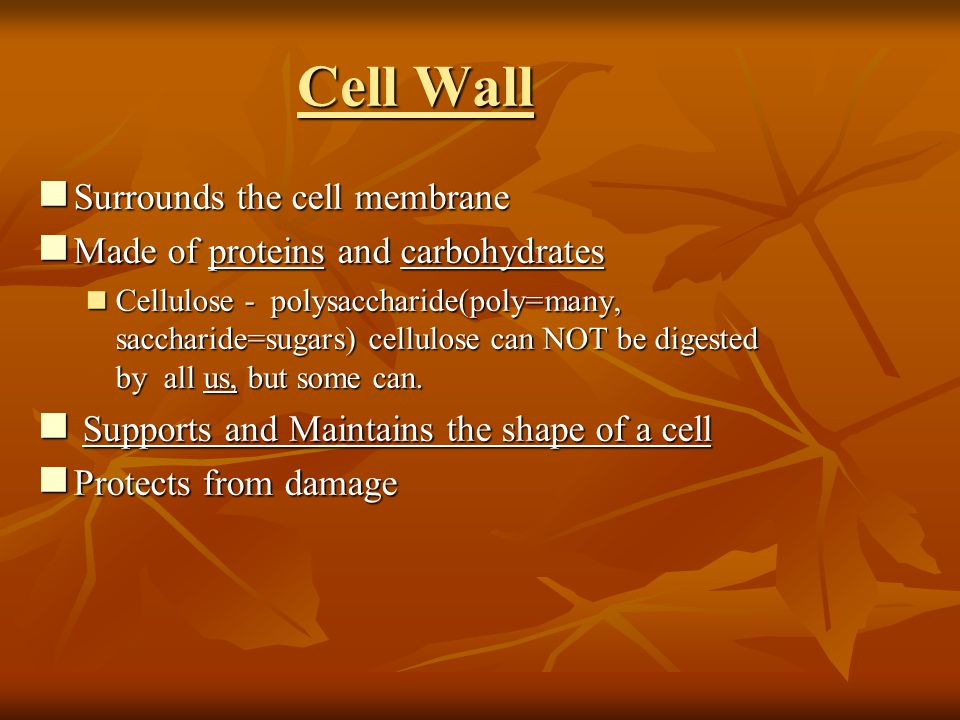 Cell Wall Surrounds the cell membrane