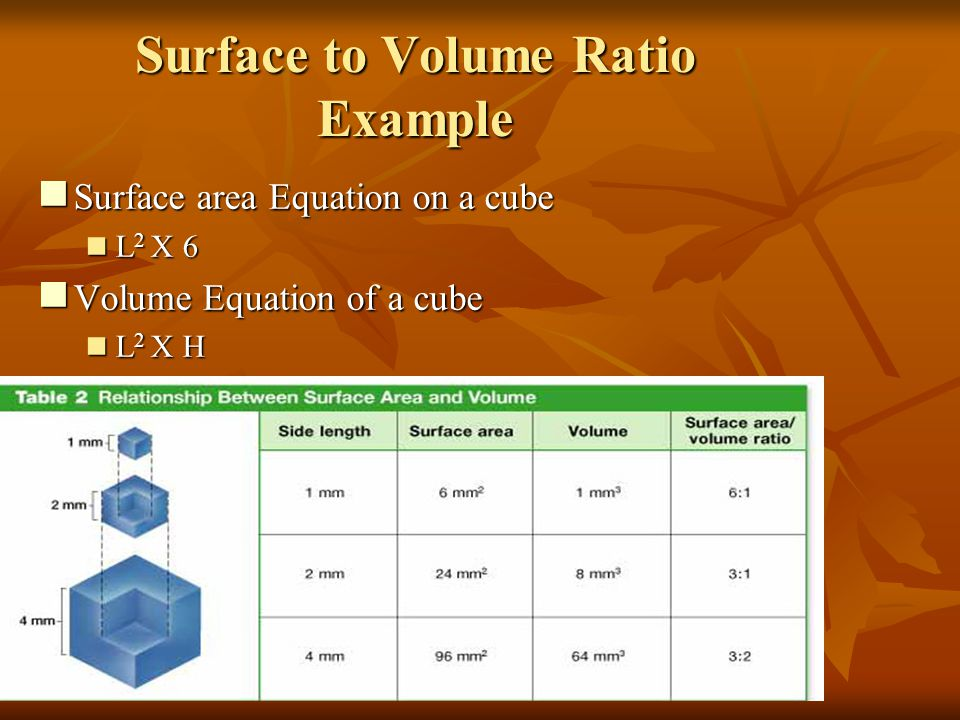 Surface to Volume Ratio Example