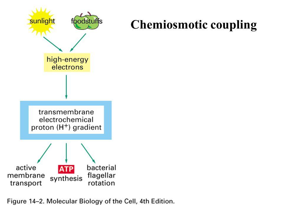 Chemiosmotic coupling