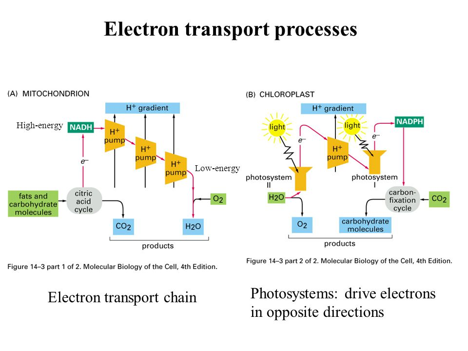 Electron transport processes
