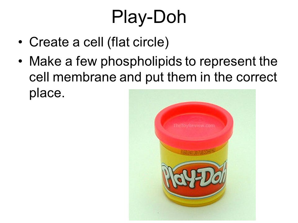 Play-Doh Create a cell (flat circle)