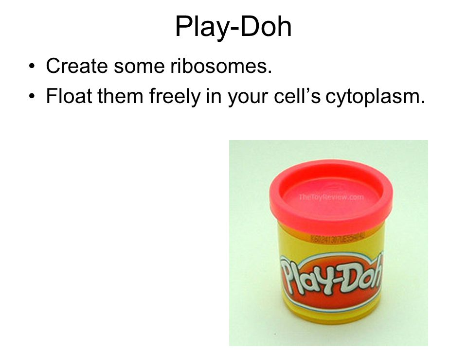Play-Doh Create some ribosomes.