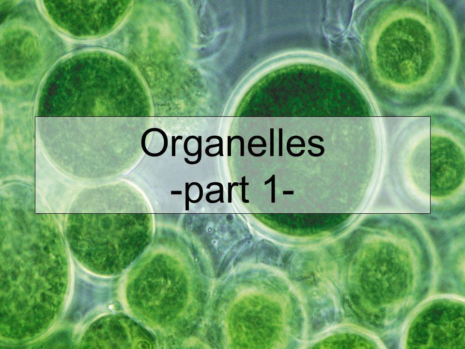 Organelles -part 1-