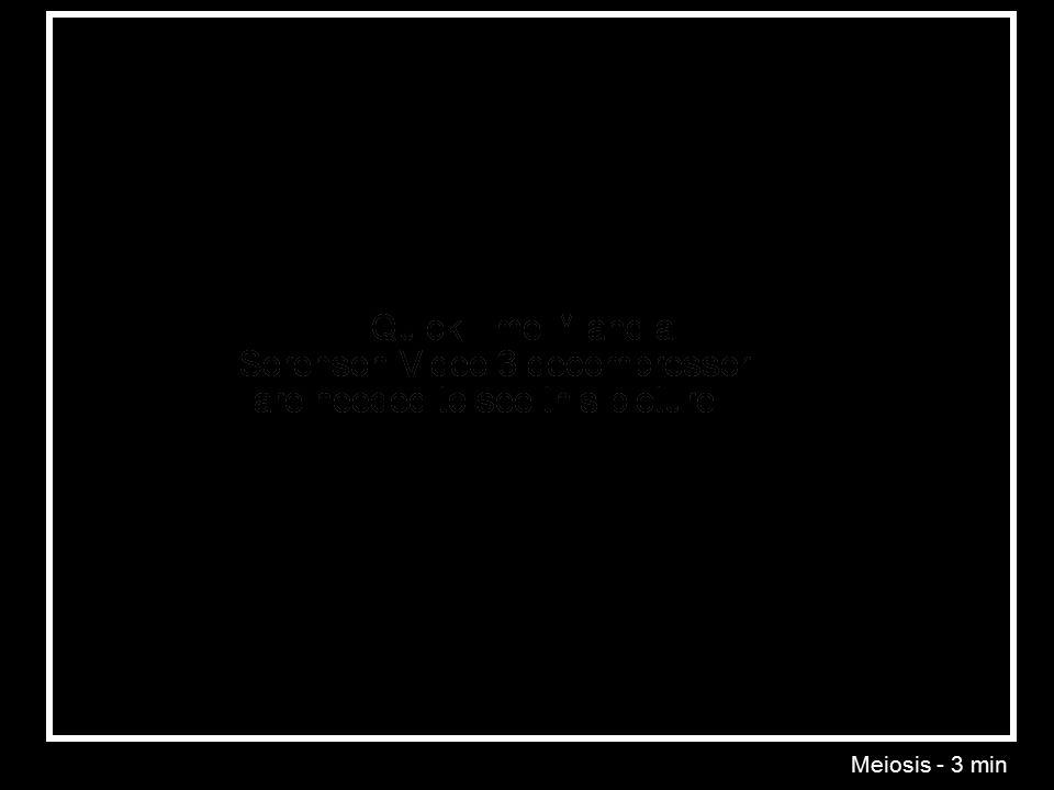 Meiosis - 3 min