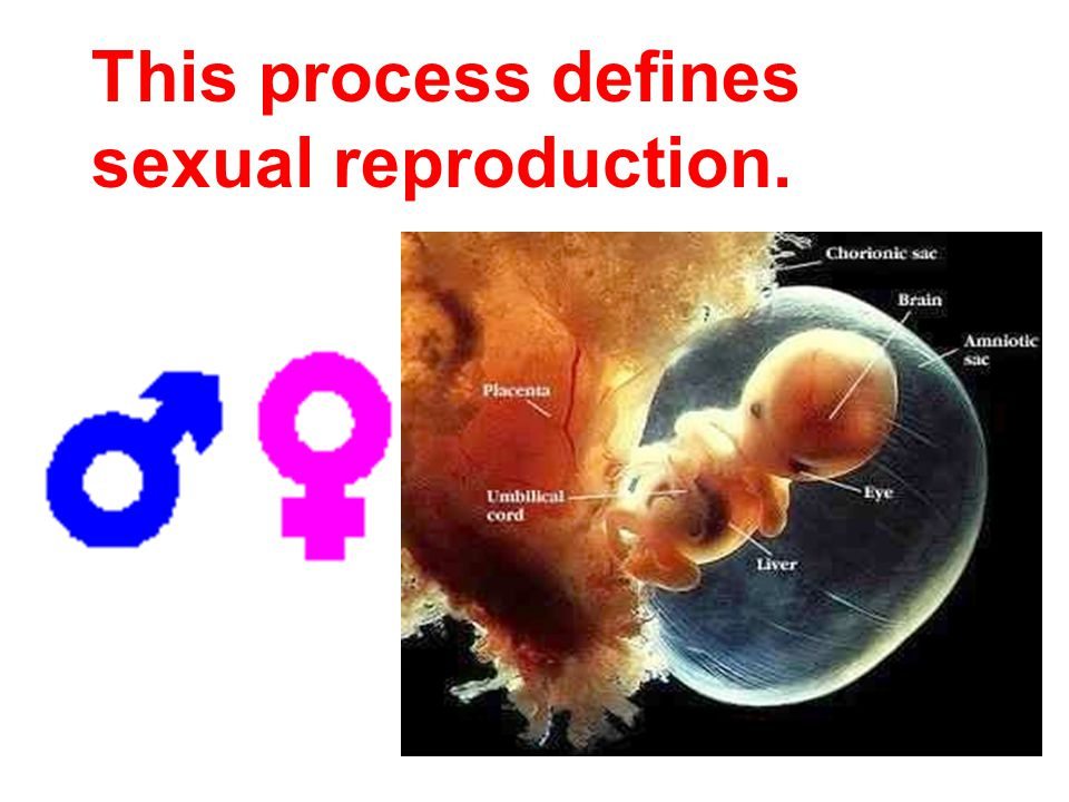 This process defines sexual reproduction.