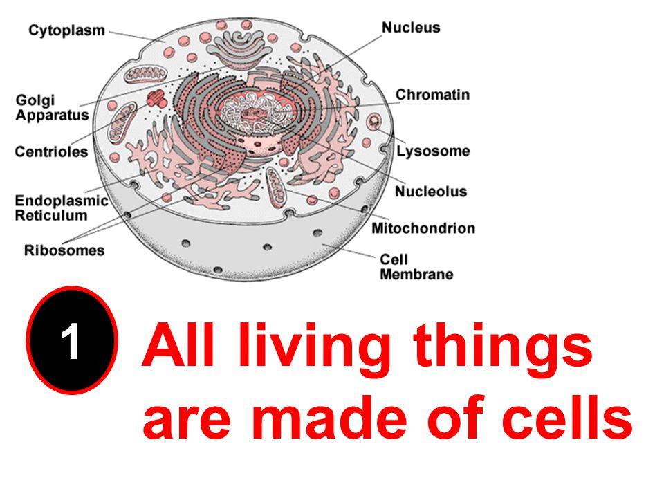 1 All living things are made of cells