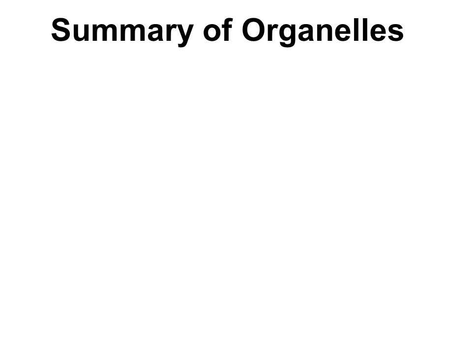 Summary of Organelles