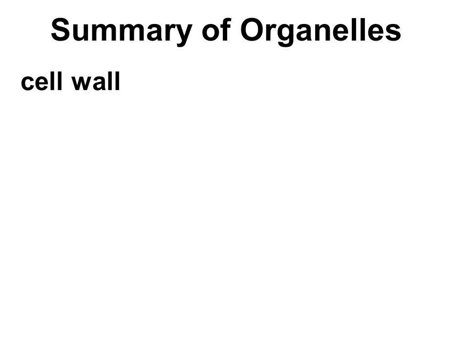 Summary of Organelles cell wall