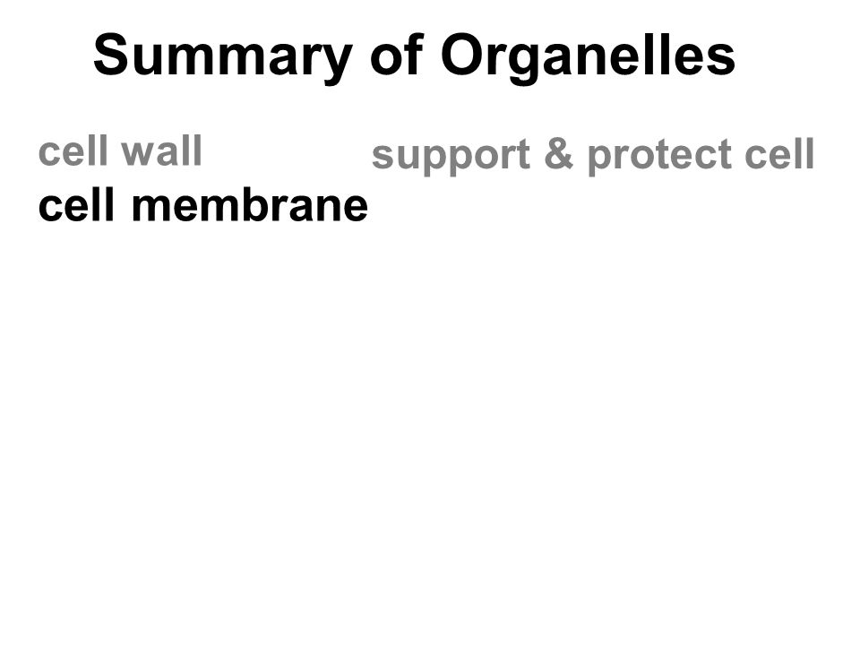Summary of Organelles cell wall cell membrane support & protect cell