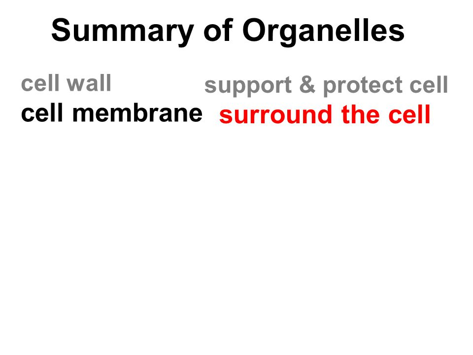 Summary of Organelles cell membrane surround the cell cell wall
