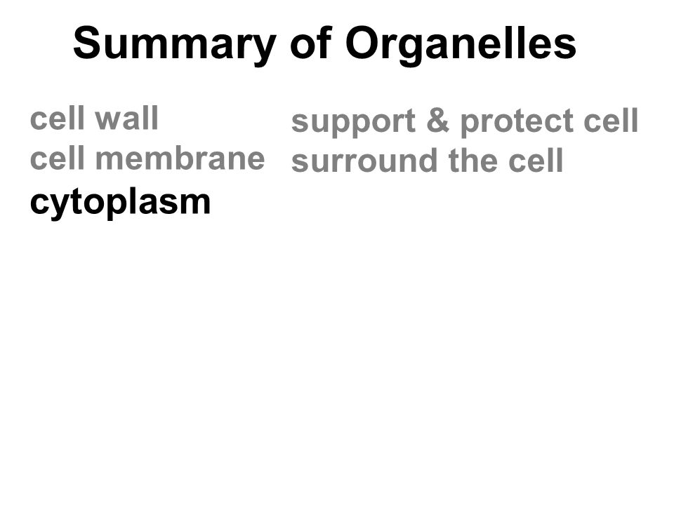 Summary of Organelles cytoplasm cell wall support & protect cell