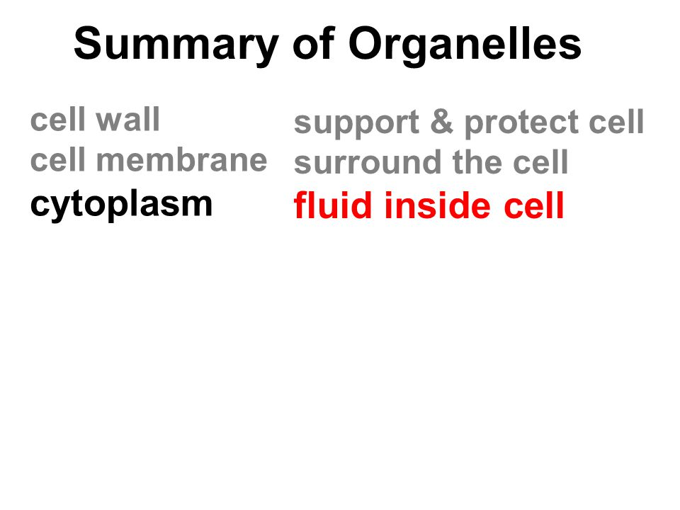 Summary of Organelles cytoplasm fluid inside cell cell wall