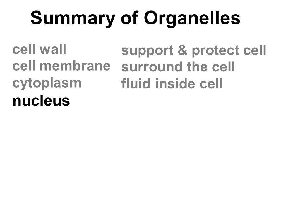 Summary of Organelles nucleus cell wall support & protect cell