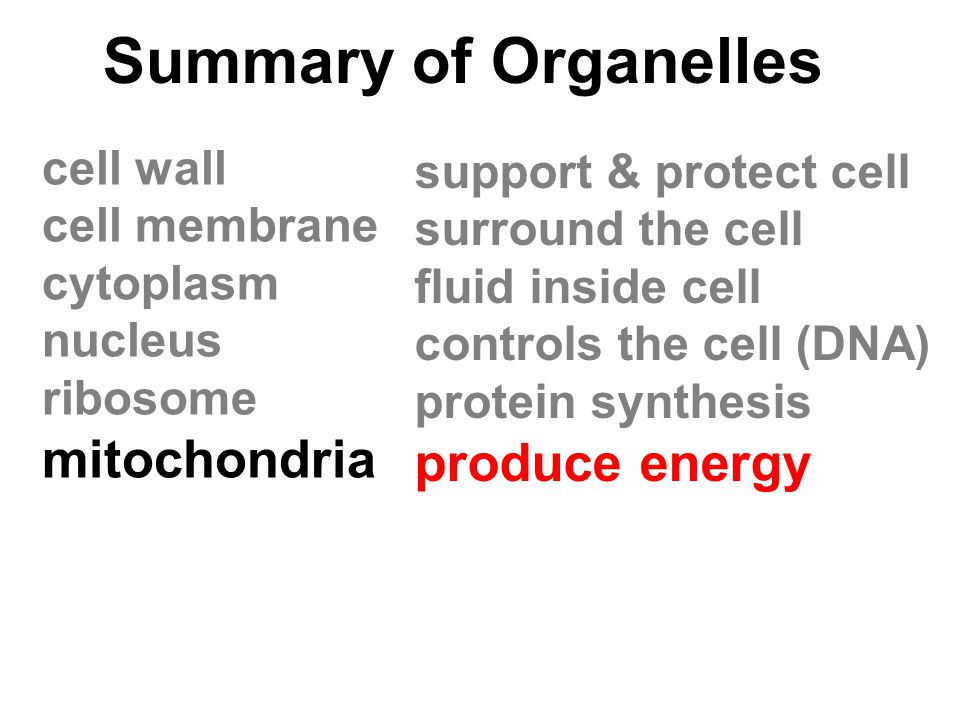 Summary of Organelles mitochondria produce energy cell wall