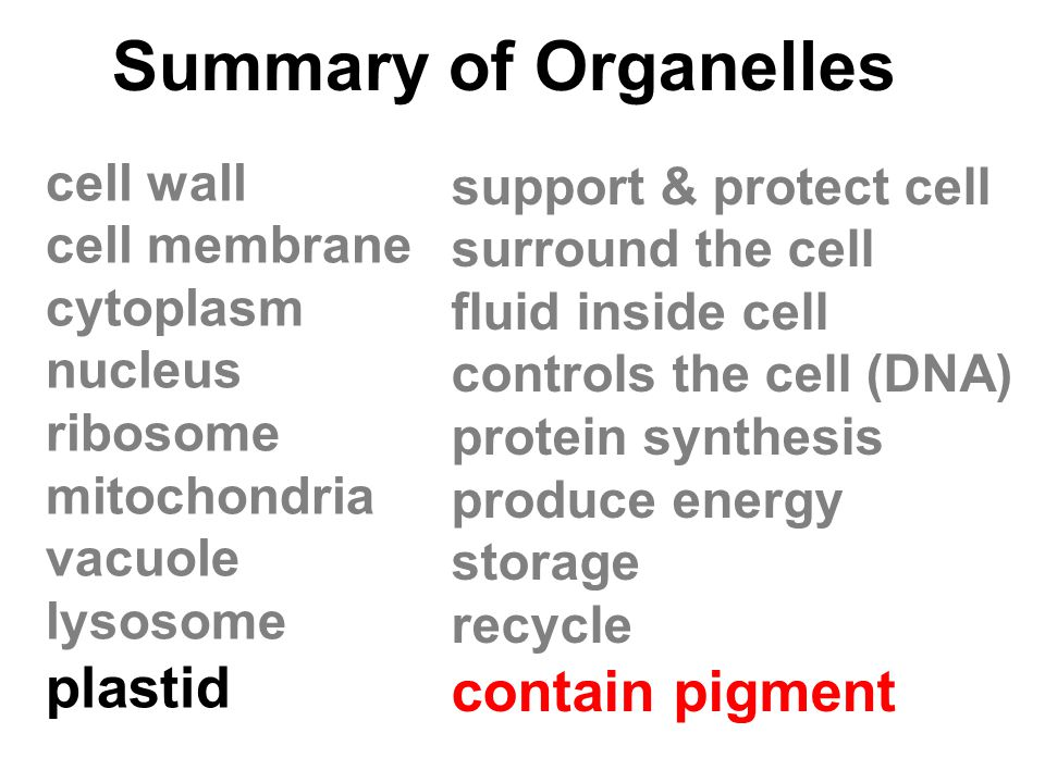 Summary of Organelles plastid contain pigment cell wall
