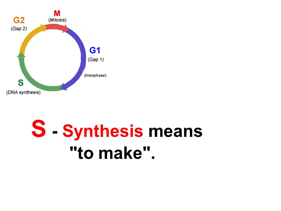 S - Synthesis means to make .