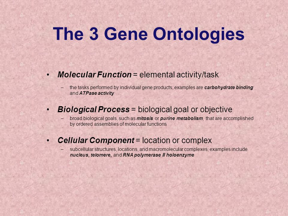 The 3 Gene Ontologies Molecular Function = elemental activity/task