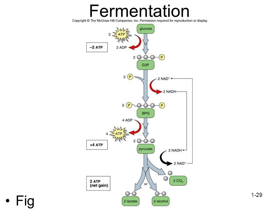 Fermentation Fig 7.10