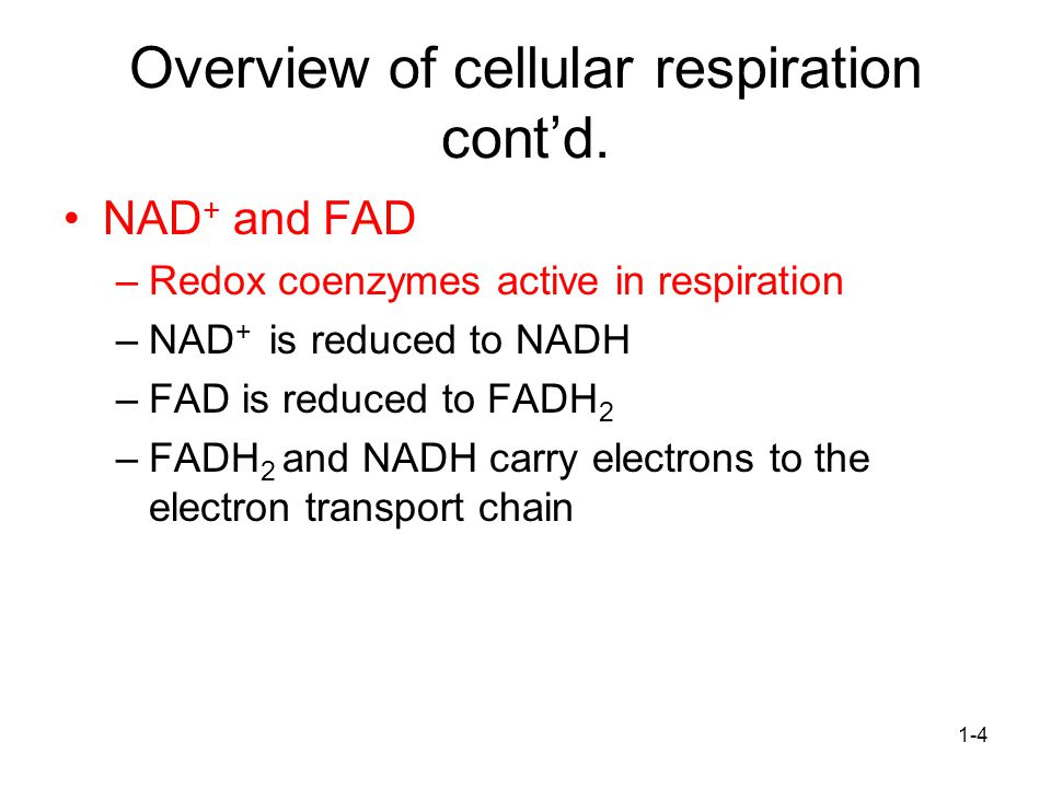 Overview of cellular respiration cont'd.