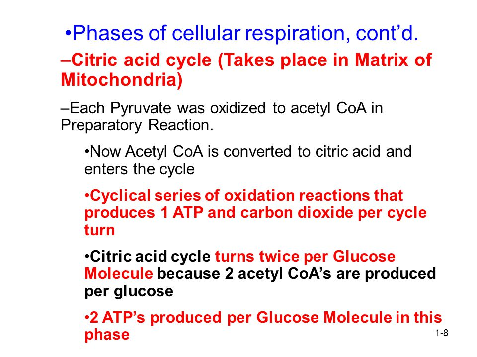 Phases of cellular respiration, cont'd.