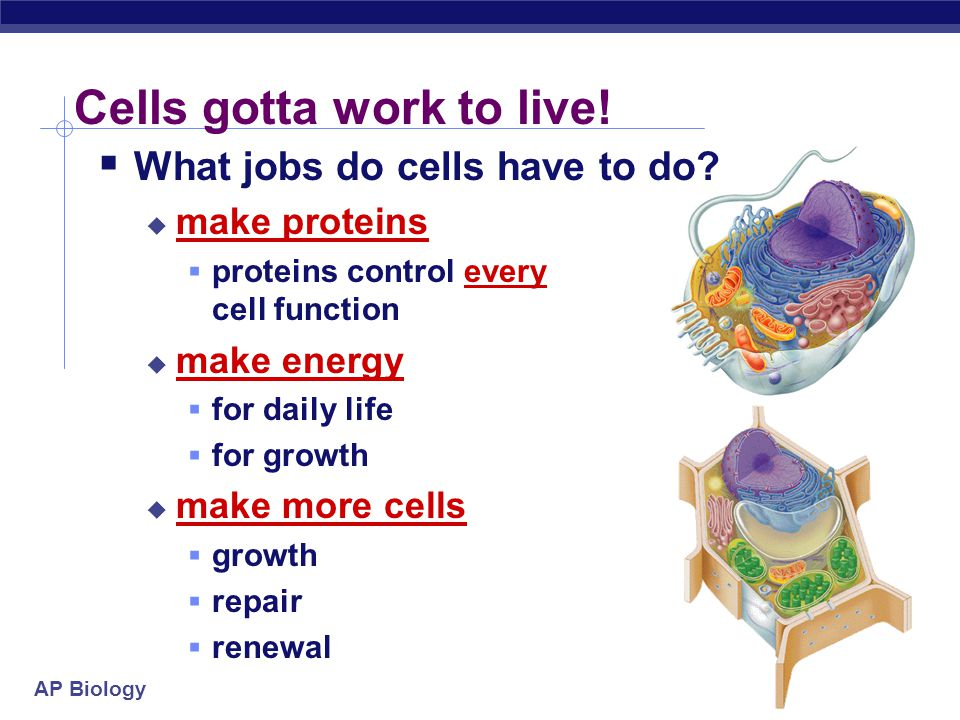 Cells gotta work to live!