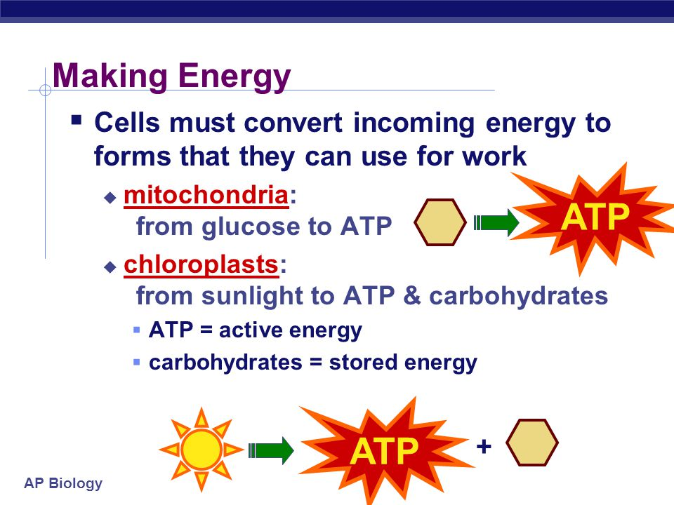 Making Energy Cells must convert incoming energy to forms that they can use for work. mitochondria: from glucose to ATP.