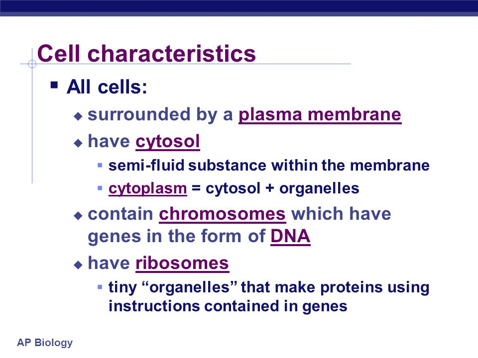 Cell characteristics All cells: surrounded by a plasma membrane