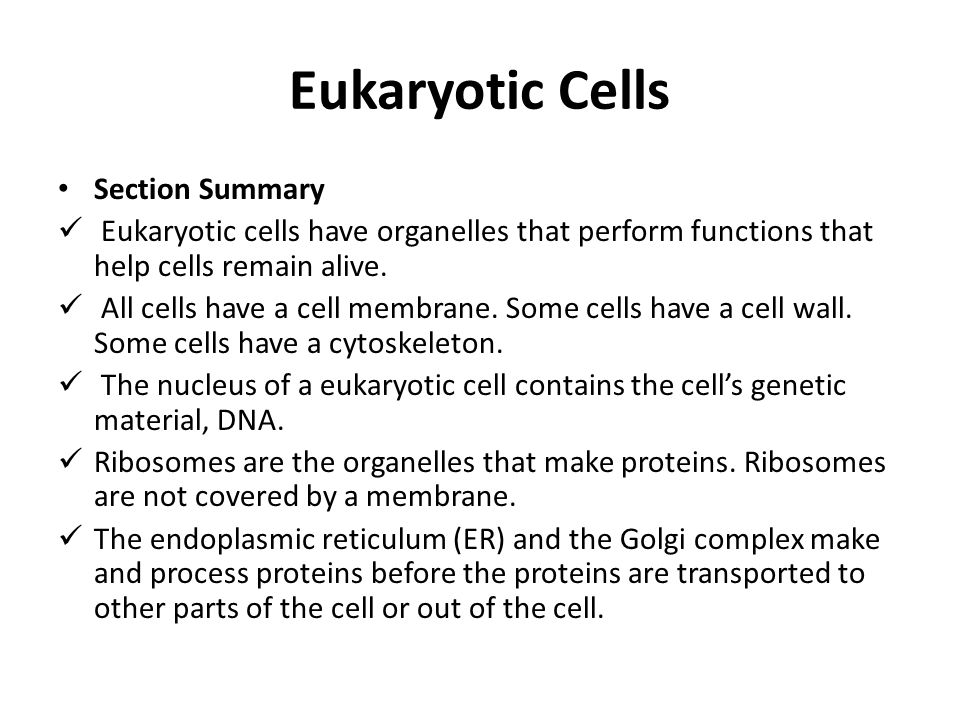 Eukaryotic Cells Section Summary