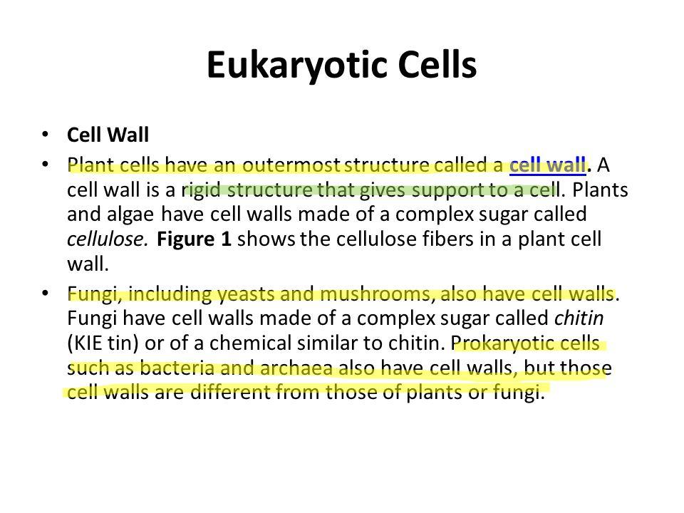Eukaryotic Cells Cell Wall