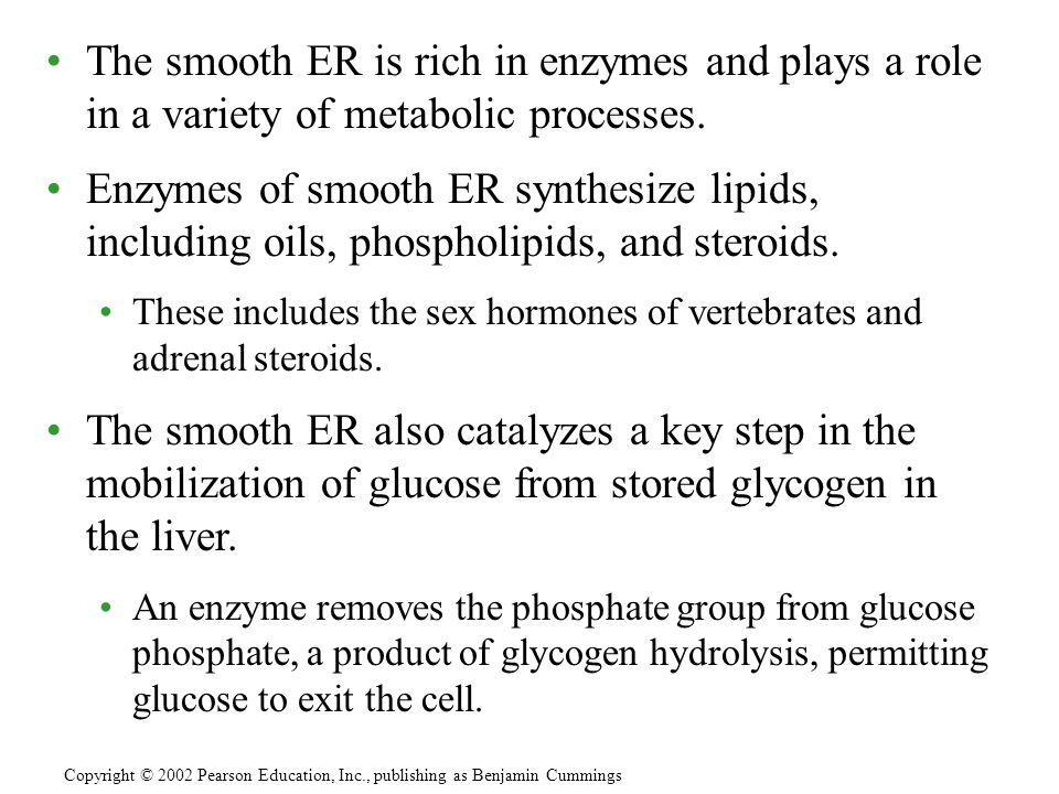 The smooth ER is rich in enzymes and plays a role in a variety of metabolic processes.