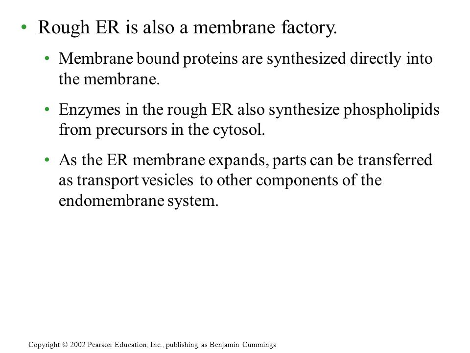 Rough ER is also a membrane factory.