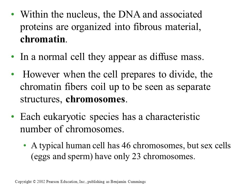 In a normal cell they appear as diffuse mass.