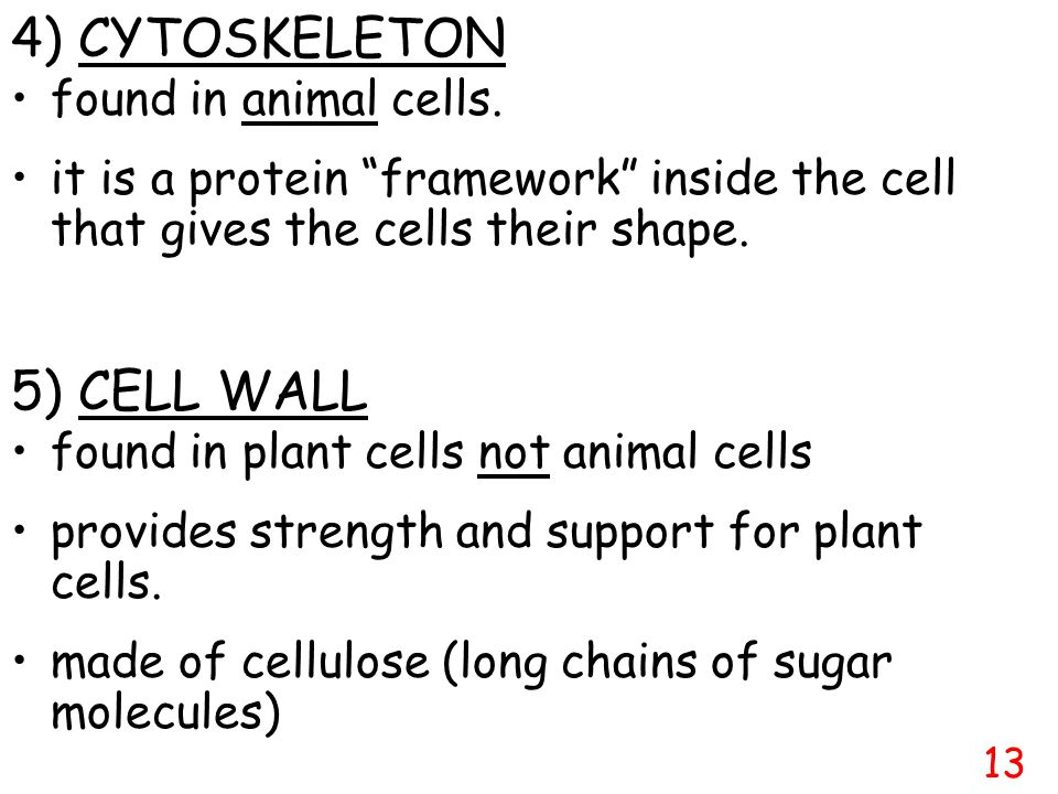 4) CYTOSKELETON 5) CELL WALL found in animal cells.