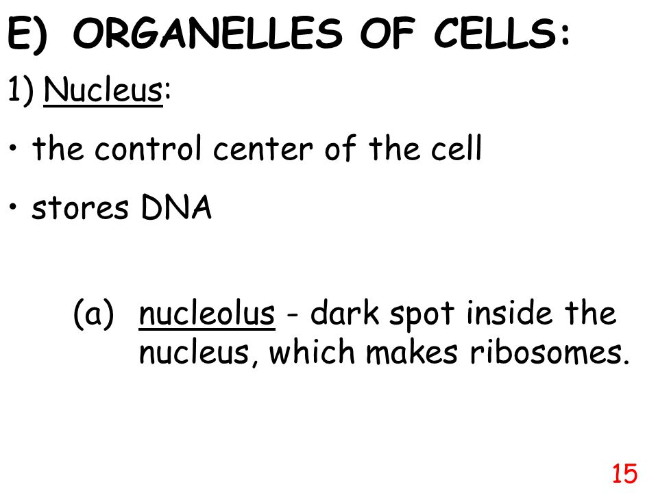 E) ORGANELLES OF CELLS: